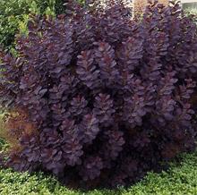 d oltmanns baumschulpflanzen startseite baumschule f r rhododendron japanische azaleen. Black Bedroom Furniture Sets. Home Design Ideas